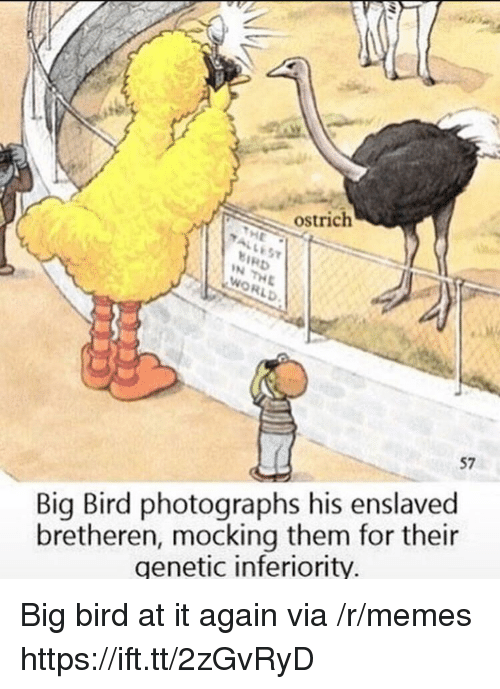 Memes, World, and Big Bird: ostrich  37  BIRD  N THE  WORLD  57  bretheren, mocking them for their  genetic inferiority  Big Bird photographs his enslaved Big bird at it again via /r/memes https://ift.tt/2zGvRyD