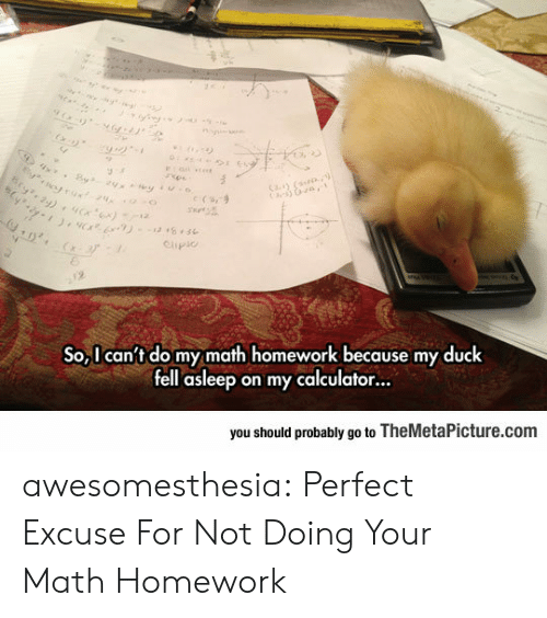 Tumblr, Blog, and Calculator: otrux24  Cay (  e (s,9  Clipio  2  So,I can't do my math homework because my duck  fell asleep on my calculator...  you should probably go to TheMetaPicture.com awesomesthesia:  Perfect Excuse For Not Doing Your Math Homework