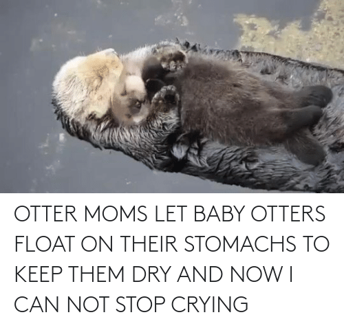 otter: OTTER MOMS LET BABY OTTERS FLOAT ON THEIR STOMACHS TO KEEP THEM DRY AND NOW I CAN NOT STOP CRYING