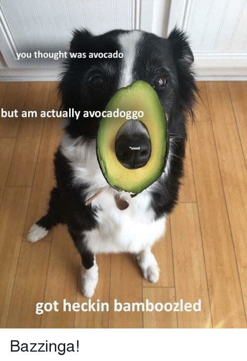 Avocado, Thought, and Got: ou thought was avocado  but am actually avocadoggo  snoot  got heckin bamboozled