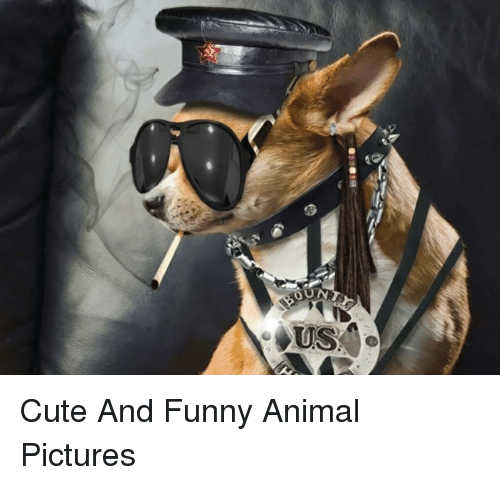 Cute And Funny Animal Pictures