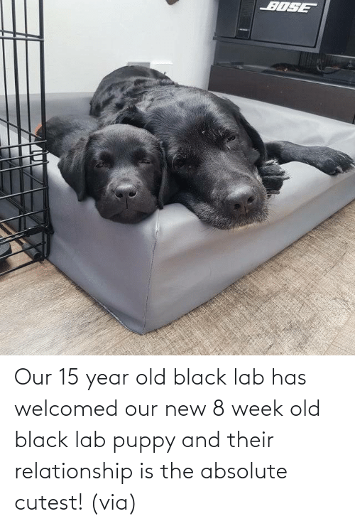 cutest: Our 15 year old black lab has welcomed our new 8 week old black lab puppy and their relationship is the absolute cutest! (via)