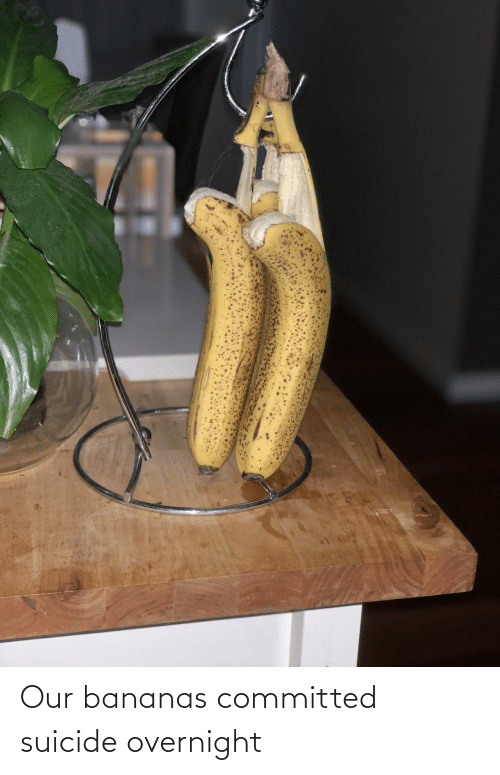 Suicide: Our bananas committed suicide overnight