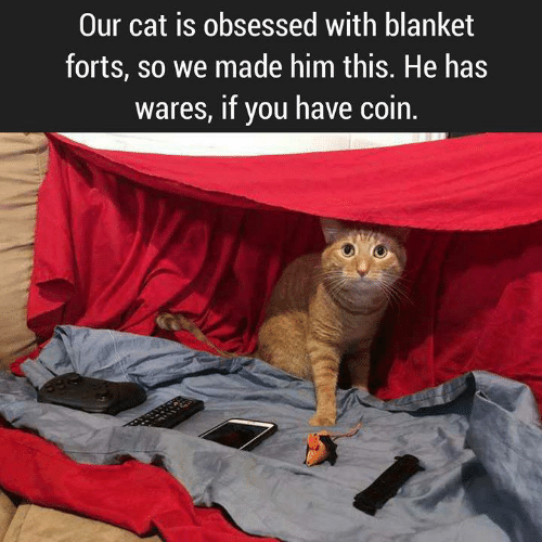 Aww Memes: Our cat is obsessed with blanket  forts, so we made him this. He has  wares, if you have coin