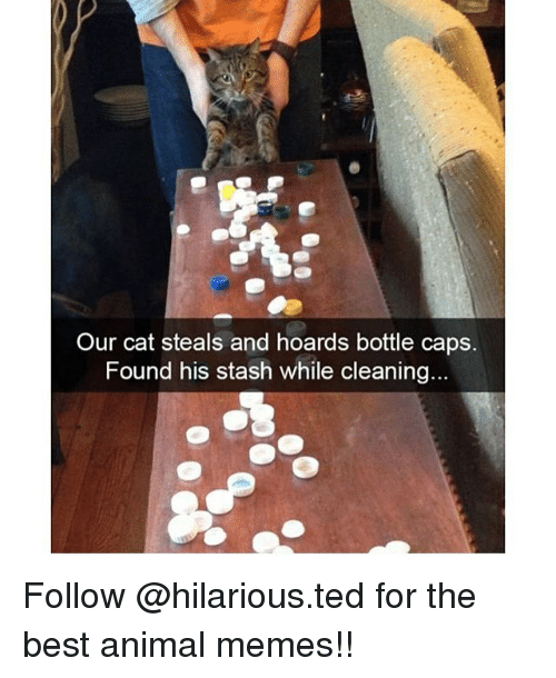 Animals Meme: Our cat steals and hoards bottle caps.  Found his stash while cleaning... Follow @hilarious.ted for the best animal memes!!