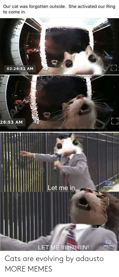 let me: Our cat was forgotten outside. She activated our Ring  to come in.  02:26:52 AM  sto  26:53 AM  Let me in.  [adult swim  LET ME IIIINIIN!  [adult swim) Cats are evolving by adausto MORE MEMES