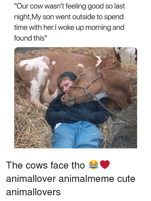 """Cute, Memes, and Good: """"Our cow wasn't feeling good so last  night,My son went outside to spend  time with her.l woke up morning and  found this'"""" The cows face tho 😂❤️ animallover animalmeme cute animallovers"""