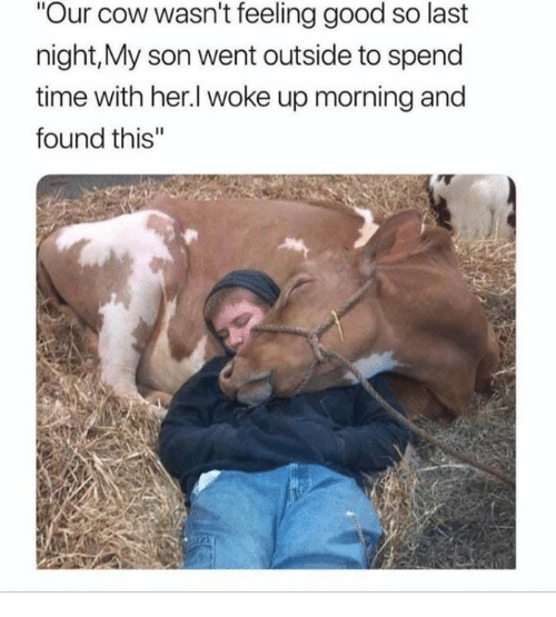 """Good, Time, and Her: Our cow wasn't feeling good so last  night,My son went outside to spend  time with her.l woke up morning and  found this"""""""
