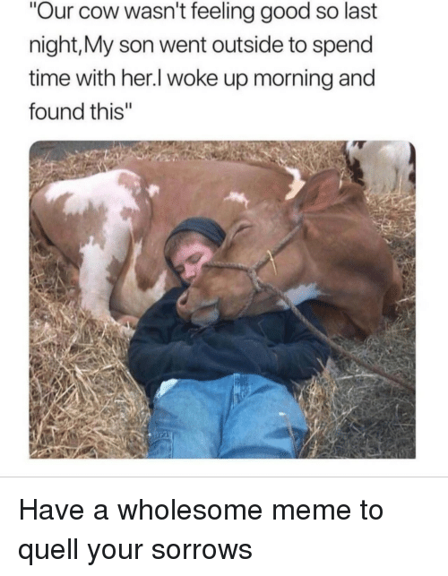 """Meme, Good, and Time: Our cow wasn't feeling good so last  night,My son went outside to spend  time with her.l woke up morning and  found this"""" <p>Have a wholesome meme to quell your sorrows</p>"""