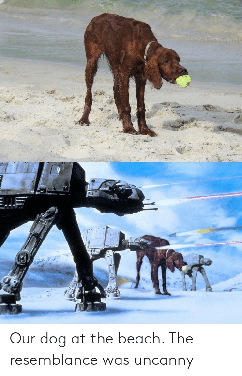 resemblance: Our dog at the beach. The resemblance was uncanny