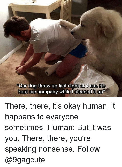 Memes, Okay, and Nonsense: Our dog threw up last night at 4 am. He  kept me company while l cleaned It up There, there, it's okay human, it happens to everyone sometimes. Human: But it was you. There, there, you're speaking nonsense. Follow @9gagcute