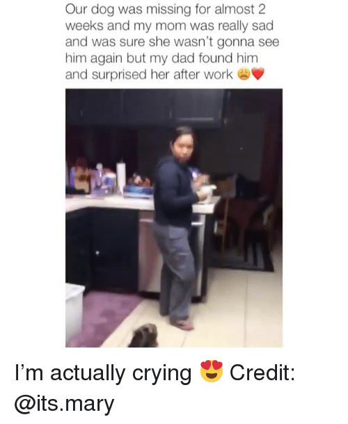 Crying, Dad, and Memes: Our dog was missing for almost 2  weeks and my mom was really sad  and was sure she wasn't gonna see  him again but my dad found him  and surprised her after work I'm actually crying 😍 Credit: @its.mary