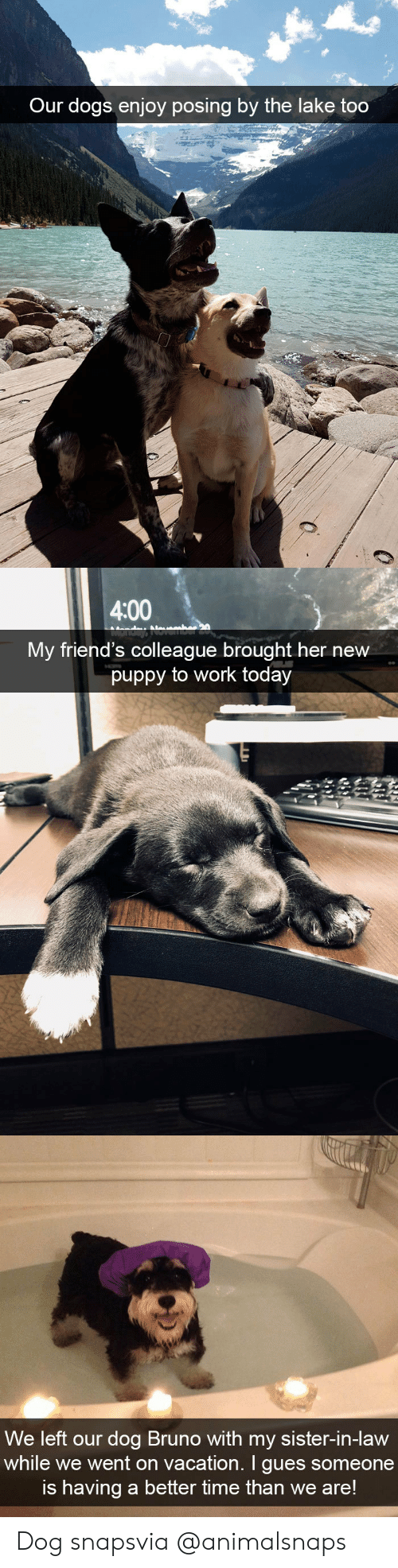 Dogs, Friends, and Target: Our dogs enjoy posing by the lake too   4:00  My friend's colleague brought her new  puppy to work today   We left our dog Bruno with my sister-in-Haw  while we went on vacation. I gues someone  is having a better time than we are! Dog snapsvia @animalsnaps