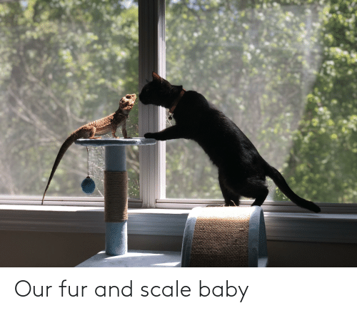 fur: Our fur and scale baby