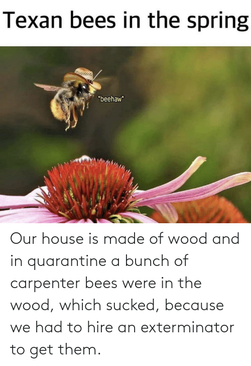 hire: Our house is made of wood and in quarantine a bunch of carpenter bees were in the wood, which sucked, because we had to hire an exterminator to get them.