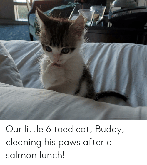 Paws: Our little 6 toed cat, Buddy, cleaning his paws after a salmon lunch!