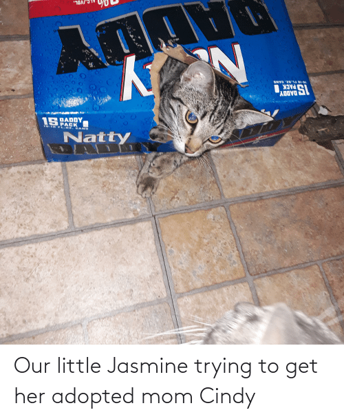 jasmine: Our little Jasmine trying to get her adopted mom Cindy