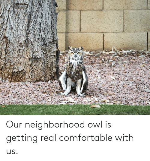 Getting: Our neighborhood owl is getting real comfortable with us.