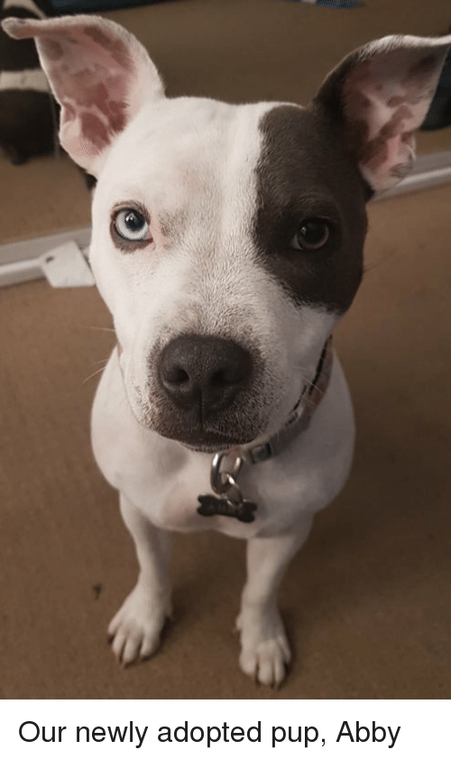 Pup, Abby, and Adopted: Our newly adopted pup, Abby