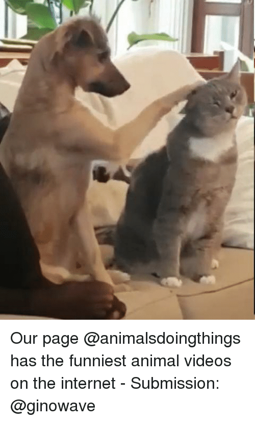 Animal Videos: Our page @animalsdoingthings has the funniest animal videos on the internet - Submission: @ginowave