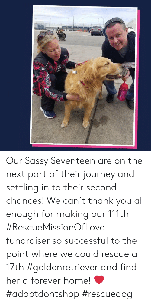 Journey, Memes, and Thank You: Our Sassy Seventeen are on the next part of their journey and settling in to their second chances! We can't thank you all enough for making our 111th #RescueMissionOfLove fundraiser so successful to the point where we could rescue a 17th #goldenretriever and find her a forever home! ❤️    #adoptdontshop #rescuedog