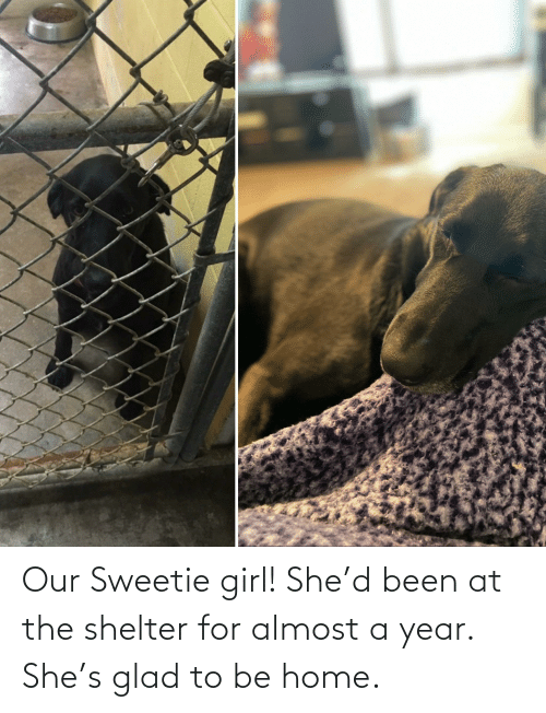 glad: Our Sweetie girl! She'd been at the shelter for almost a year. She's glad to be home.