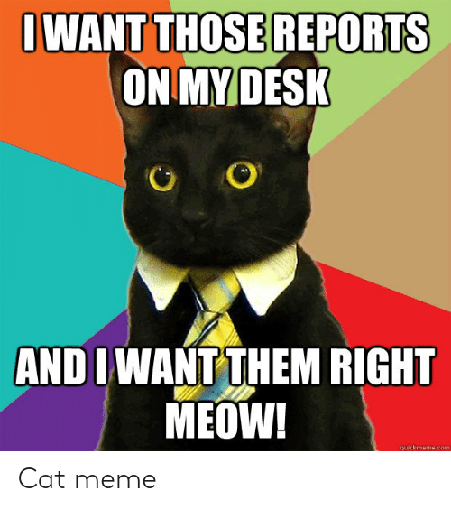 cat meme: OWANT THOSEREPORTS  ON MY DESK  AND I WANT THEM RIGHT  MEOW!  quickmeme.com Cat meme