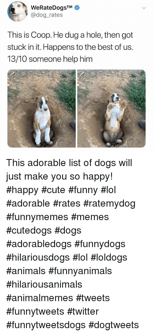 Animals, Cute, and Dogs: oWeRateDogSTM  @dog rates  This is Coop. He dug a hole, then got  stuck in it. Happens to the best of us.  13/10 someone help him This adorable list of dogs will just make you so happy! #happy #cute #funny #lol #adorable #rates #ratemydog #funnymemes #memes #cutedogs #dogs #adorabledogs #funnydogs #hilariousdogs #lol #loldogs #animals #funnyanimals #hilariousanimals #animalmemes #tweets #funnytweets #twitter #funnytweetsdogs #dogtweets
