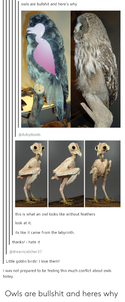 Labyrinth: owls are bullshit and here's why  @dubydoods  this is what an owl looks like without feathers  look at it.  its like it came from the labyrinth.  thanks! i hate it  @drearncatcher37  Little goblin birds!  love them!  I was not prepared to be feeling this much conflict about owls  today. Owls are bullshit and heres why