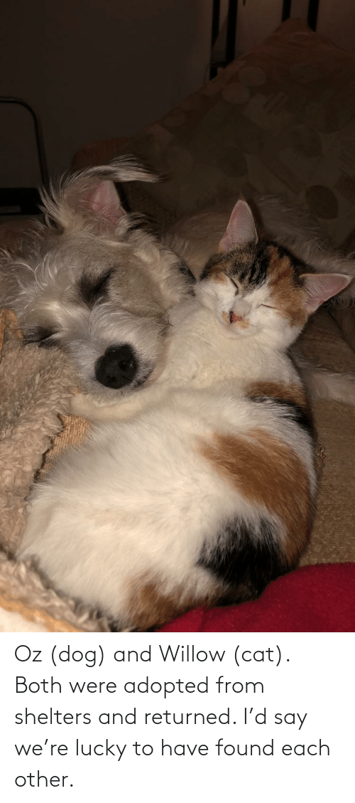 willow: Oz (dog) and Willow (cat). Both were adopted from shelters and returned. I'd say we're lucky to have found each other.