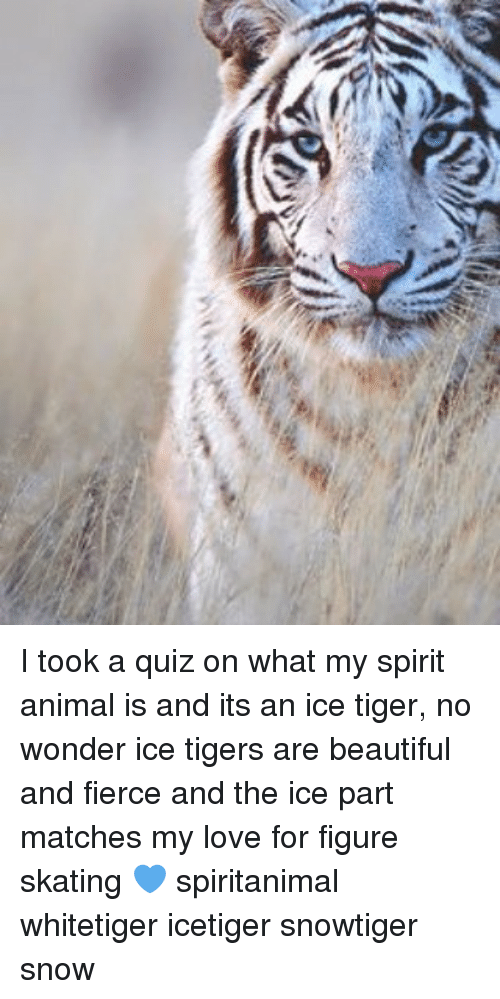Ice Tigers: p> I took a quiz on what my spirit animal is and its an ice tiger, no wonder ice tigers are beautiful and fierce and the ice part matches my love for figure skating 💙 spiritanimal whitetiger icetiger snowtiger snow