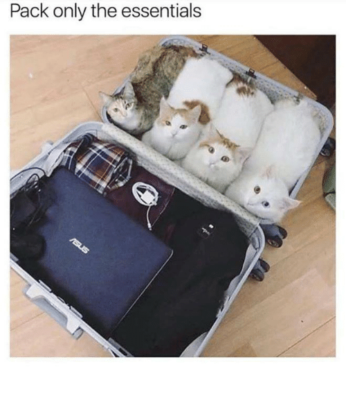Memes, 🤖, and Essentials: Pack only the essentials