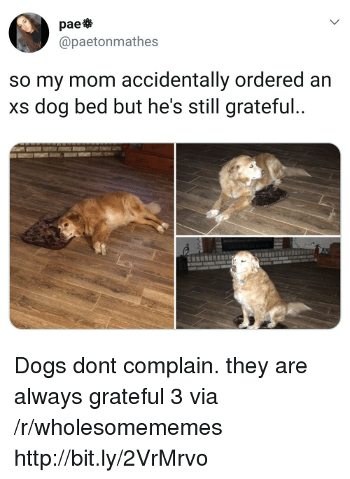 Dogs, Http, and Mom: pae  @paetonmathes  so my mom accidentally ordered an  xs dog bed but he's still grateful Dogs dont complain. they are always grateful 3 via /r/wholesomememes http://bit.ly/2VrMrvo