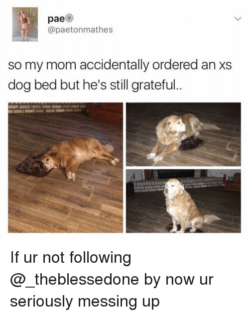 Dank Memes, Mom, and Dog: @paetonmathes  so my mom accidentally ordered an xs  dog bed but he's still grateful If ur not following @_theblessedone by now ur seriously messing up