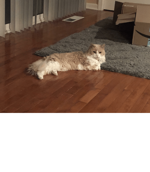 paint me like one of your french girls: Paint me like one of your French girls. This girl just turned 16. Majestic as ever (and she's all hair).