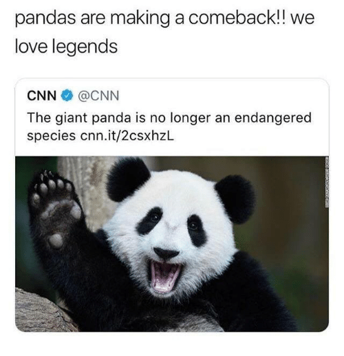 cnn.com, Love, and Panda: pandas are making a comeback!! we  love legends  CNN @CNN  The giant panda is no longer an endangered  species cnn.it/2csxhzL