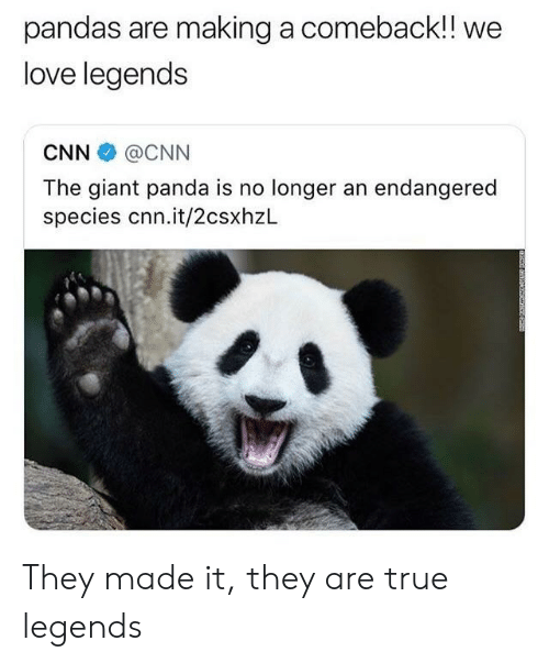 cnn.com, Love, and True: pandas are making a comeback!! we  love legends  CNN @CNN  The giant panda is no longer an endangered  species cnn.it/2csxhzL They made it, they are true legends