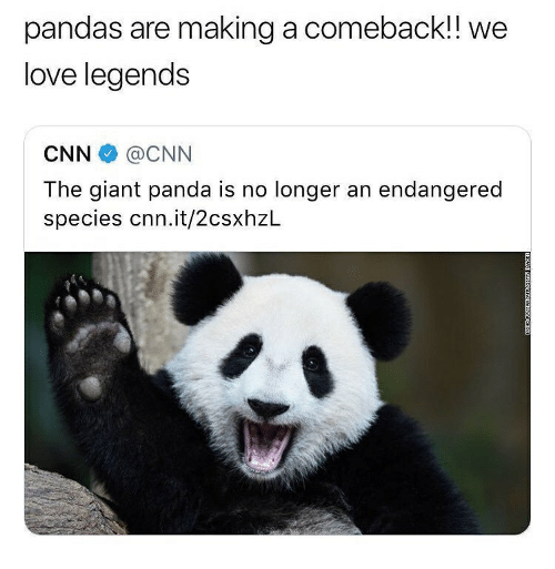cnn.com, Love, and Memes: pandas are making a comeback!! we  love legends  CNN@CNN  The giant panda is no longer an endangered  species cnn.it/2csxhzL