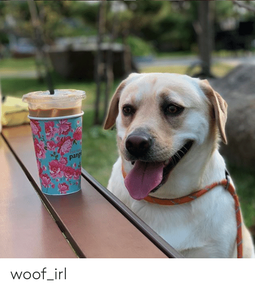 Irl, Dog IRL, and Woof: pang woof_irl