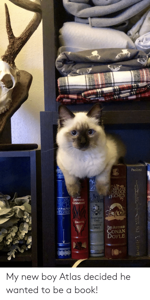 Arthur, American, and Book: Paolini  OMPLETE  ERLOCK  HOLMES  Nen  aman  THE  MOBY DIVINE  COMEDY  ERMAN  MELVILE  American  Gods  DANTE  Anansi  Beys  SIR ARTHUR  CONAN  DOYLE My new boy Atlas decided he wanted to be a book!