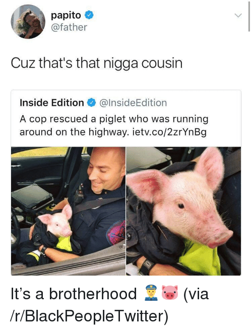 inside edition: papito  @father  Cuz that's that nigga cousin  Inside Edition@InsideEdition  A cop rescued a piglet who was running  around on the highway. ietv.co/2zrYnBg <p>It&rsquo;s a brotherhood 👮🐷 (via /r/BlackPeopleTwitter)</p>