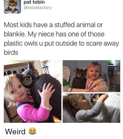 Memes, Scare, and Weird: pat tobin  @tastefactory  Most kids have a stuffed animal or  blankie. My niece has one of those  plastic owls u put outside to scare away  birds Weird 😂