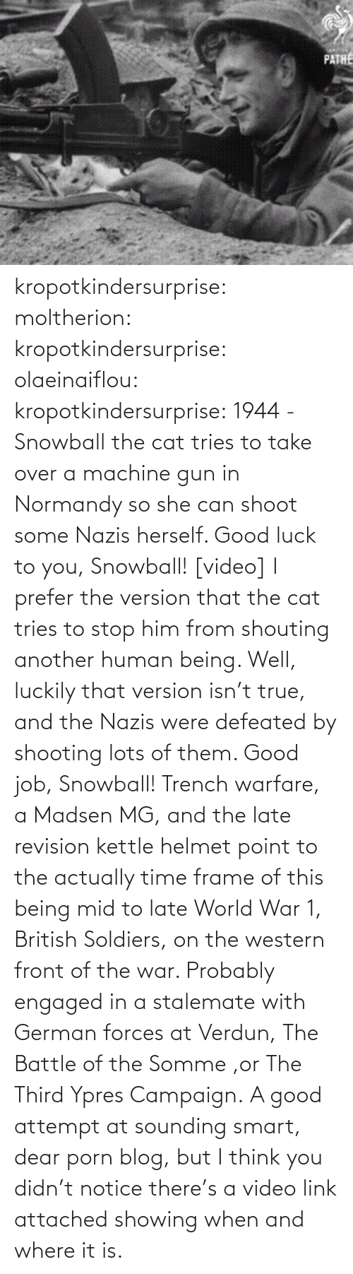 The War: PATHE kropotkindersurprise: moltherion:  kropotkindersurprise:  olaeinaiflou:  kropotkindersurprise: 1944 - Snowball the cat tries to take over a machine gun in Normandy so she can shoot some Nazis herself. Good luck to you, Snowball! [video]  I prefer the version that the cat tries to stop him from shouting another human being.   Well, luckily that version isn't true, and the Nazis were defeated by shooting lots of them. Good job, Snowball!   Trench warfare, a Madsen MG, and the late revision kettle helmet point to the actually time frame of this being mid to late World War 1, British Soldiers, on the western front of the war. Probably engaged in a stalemate with German forces at Verdun, The Battle of the Somme ,or The Third Ypres Campaign.  A good attempt at sounding smart, dear porn blog, but I think you didn't notice there's a video link attached showing when and where it is.