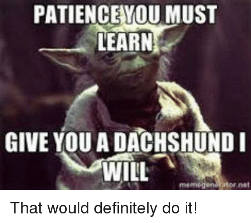 Memegener: PATIENCE YOU MUST  LEARN  GIVE YOU A DACHSHUND I  WILL  memegen Ator net That would definitely do it!