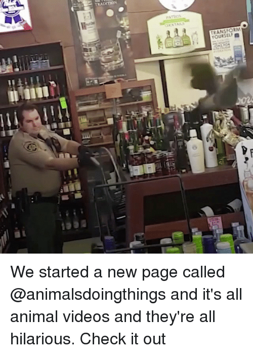 Animal Videos: PATIOS  TRANSFORM  YOURSELF We started a new page called @animalsdoingthings and it's all animal videos and they're all hilarious. Check it out
