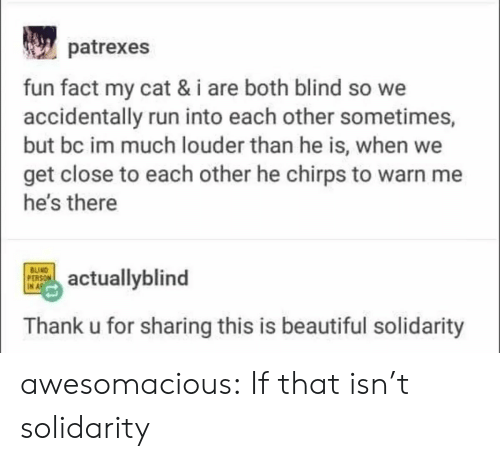 This Is Beautiful: patrexes  fun fact my cat & i are both blind so we  accidentally run into each other sometimes,  but bc im much louder than he is, when we  get close to each other he chirps to warn me  he's there  BUIND  PERSON  IN A  actuallyblind  Thank u for sharing this is beautiful solidarity awesomacious:  If that isn't solidarity