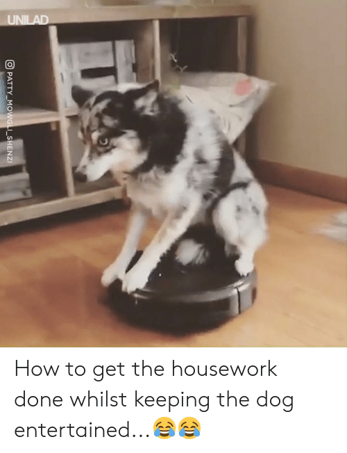Entertained: PATTY-MG  I-SHENZI How to get the housework done whilst keeping the dog entertained...😂😂