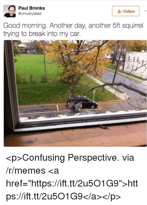 """Memes, Good Morning, and Break: Paul Bronks  @virtuallydead  Followv  Good morning. Another day, another 5ft squirrel  trying to break into my car. <p>Confusing Perspective. via /r/memes <a href=""""https://ift.tt/2u5O1G9"""">https://ift.tt/2u5O1G9</a></p>"""