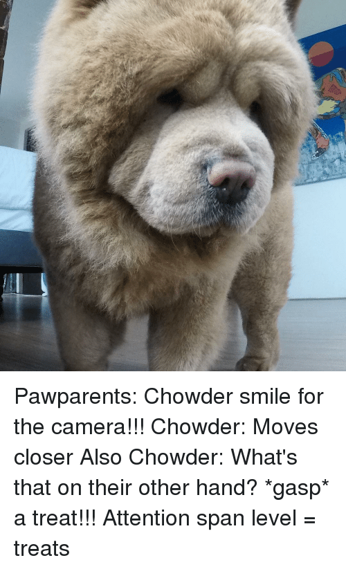 Memes, Chowder, and 🤖: Pawparents: Chowder smile for the camera!!! Chowder: Moves closer Also Chowder: What's that on their other hand? *gasp* a treat!!! Attention span level = treats