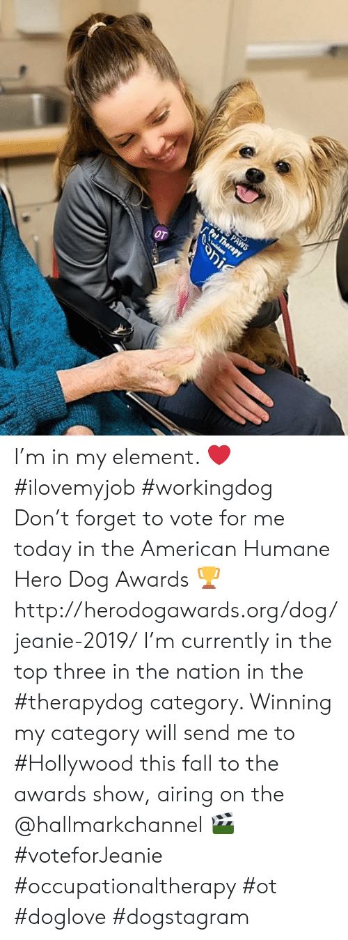 Hallmarkchannel: PAWS  nerapy  OT  onie I'm in my element. ❤️  #ilovemyjob #workingdog  Don't forget to vote for me today in the American Humane Hero Dog Awards 🏆 http://herodogawards.org/dog/jeanie-2019/ I'm currently in the top three in the nation in the #therapydog category. Winning my category will send me to #Hollywood this fall to the awards show, airing on the @hallmarkchannel 🎬  #voteforJeanie #occupationaltherapy #ot #doglove #dogstagram